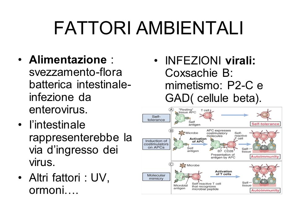FATTORI AMBIENTALI Alimentazione : svezzamento-flora batterica intestinale-infezione da enterovirus.