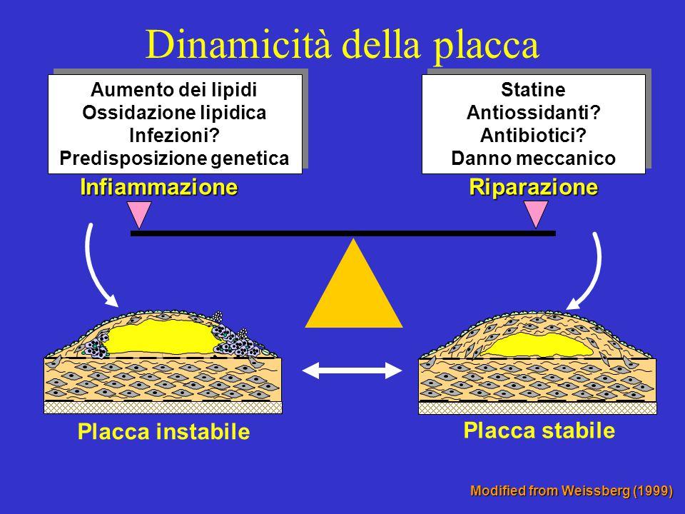 Dinamicità della placca