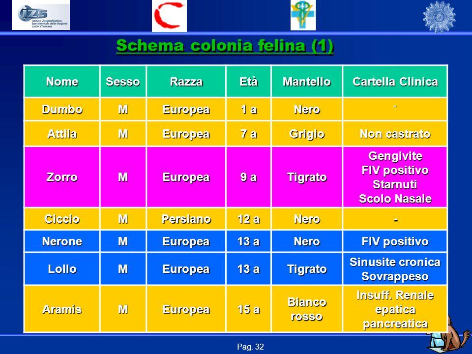 Schema colonia felina (1)