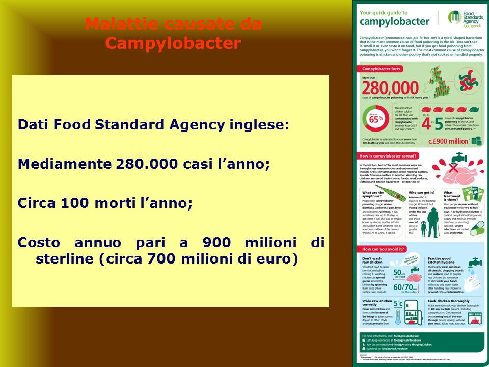 Malattie causate da Campylobacter