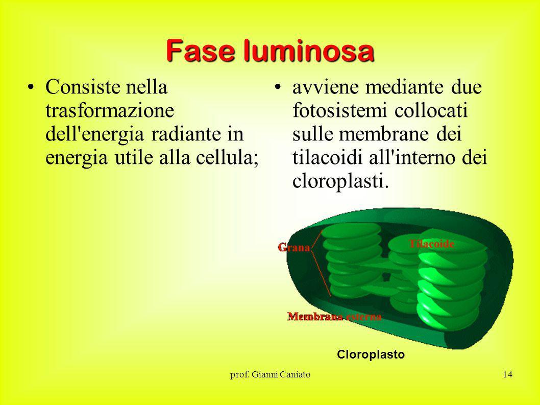 Fase luminosa Consiste nella trasformazione dell energia radiante in energia utile alla cellula;