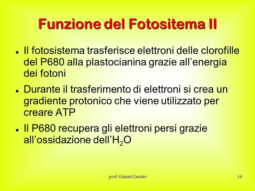 Funzione del Fotositema II