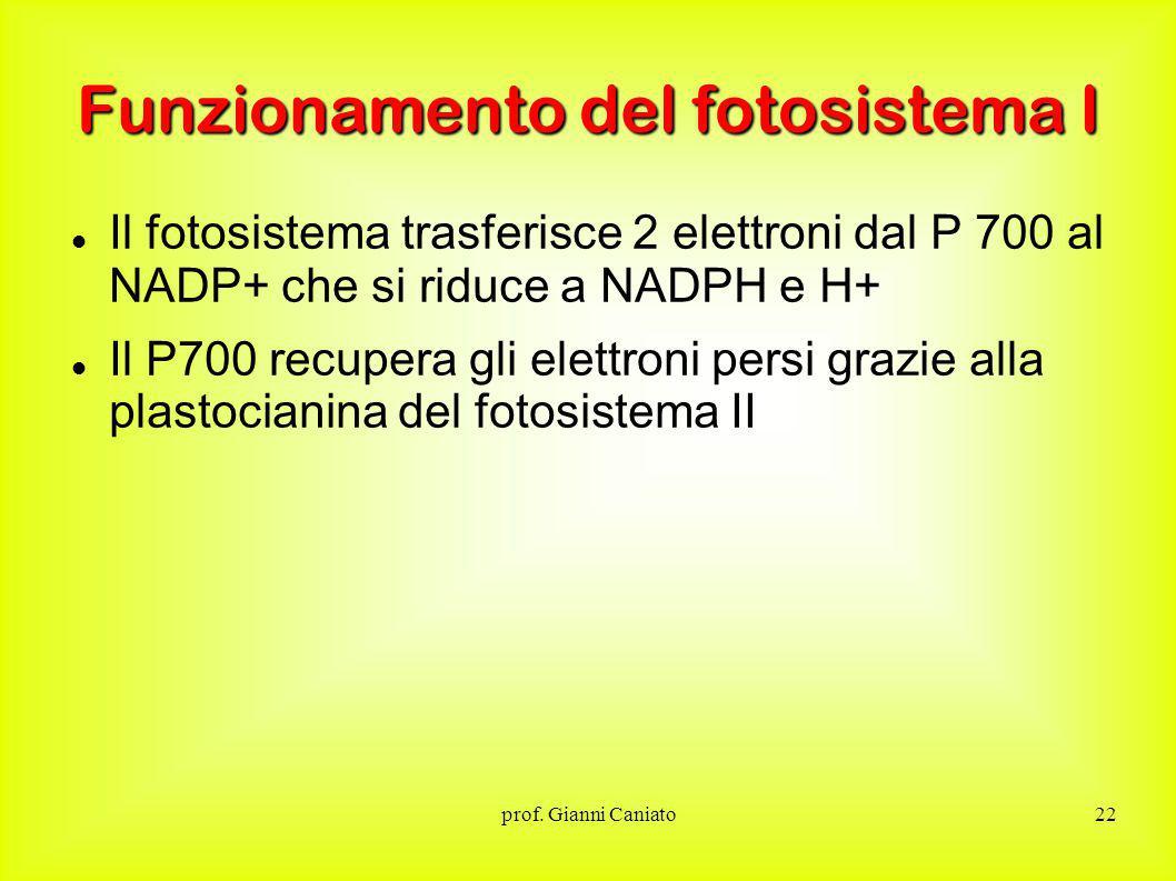 Funzionamento del fotosistema I
