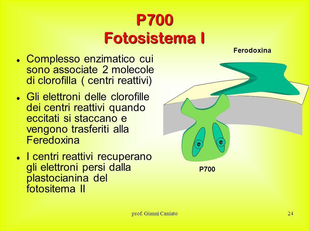 P700 Fotosistema I Ferodoxina. Complesso enzimatico cui sono associate 2 molecole di clorofilla ( centri reattivi)