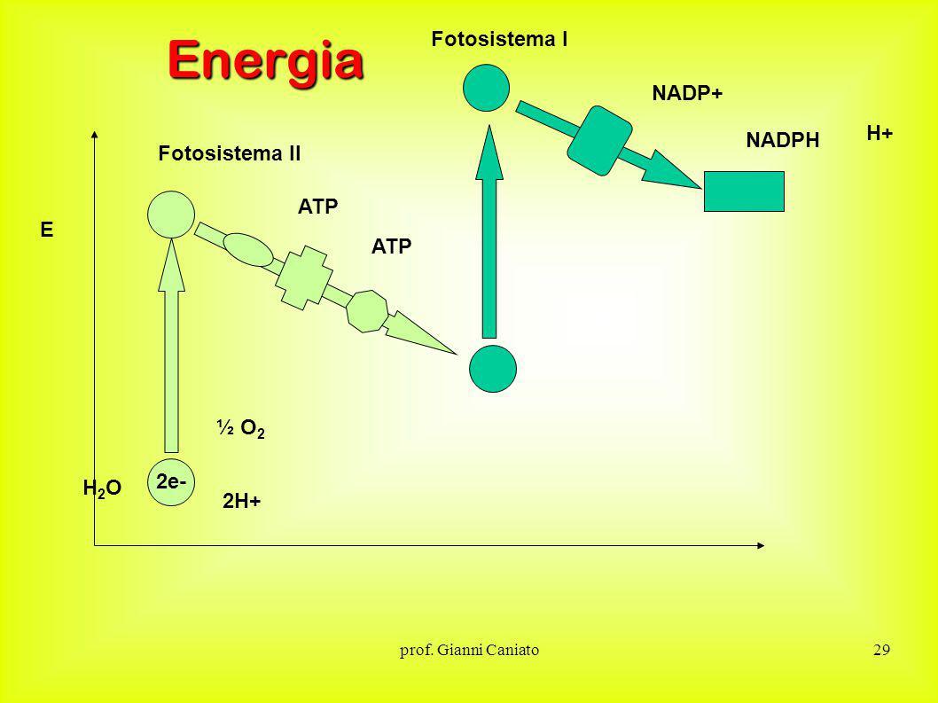 Energia Fotosistema I NADP+ H+ NADPH Fotosistema II ATP E ATP ½ O2 2e-