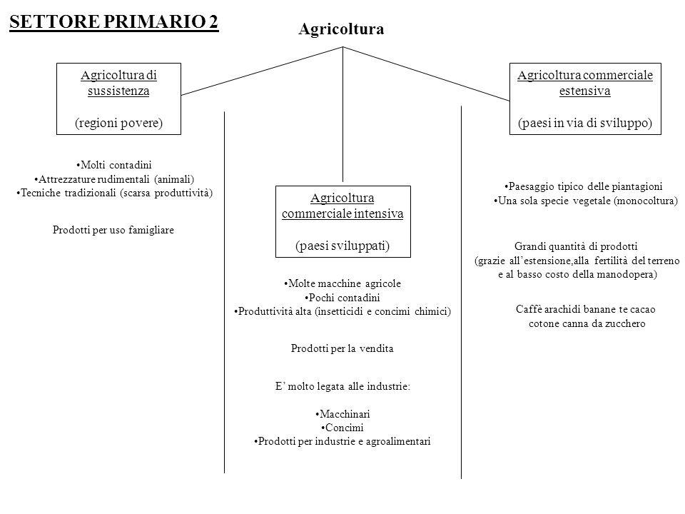 SETTORE PRIMARIO 2 Agricoltura Agricoltura di sussistenza