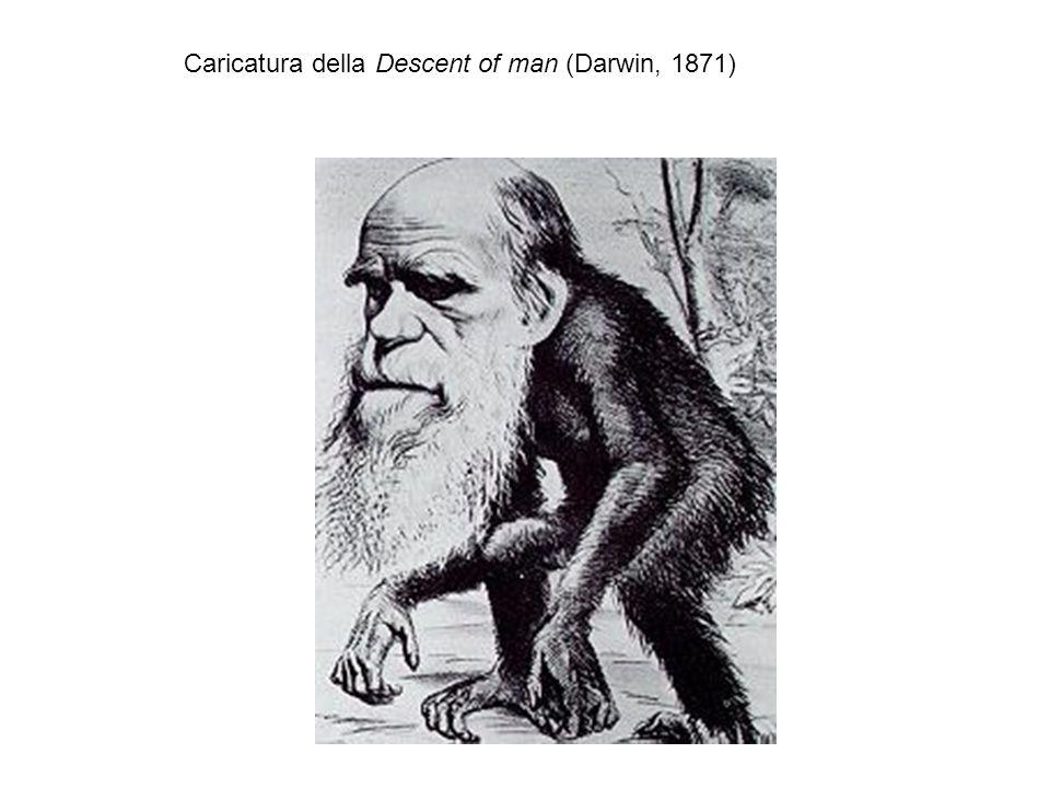 Caricatura della Descent of man (Darwin, 1871)