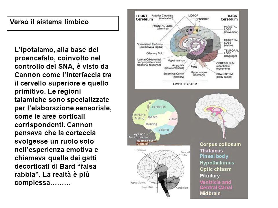 Verso il sistema limbico