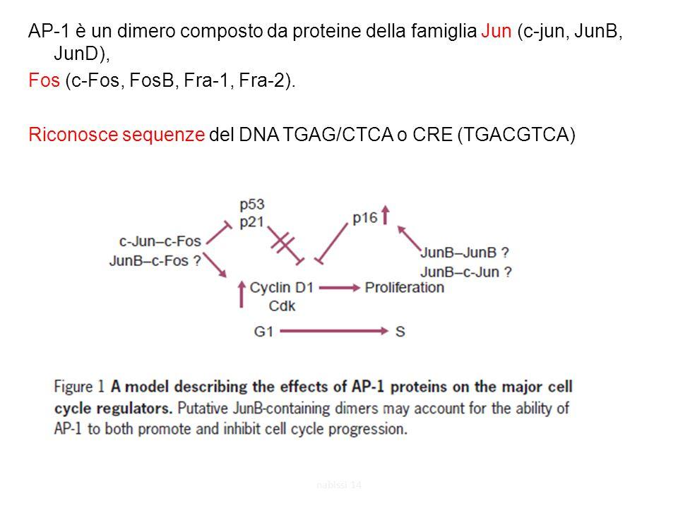AP-1 è un dimero composto da proteine della famiglia Jun (c-jun, JunB, JunD), Fos (c-Fos, FosB, Fra-1, Fra-2). Riconosce sequenze del DNA TGAG/CTCA o CRE (TGACGTCA)