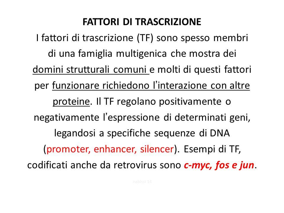 FATTORI DI TRASCRIZIONE I fattori di trascrizione (TF) sono spesso membri di una famiglia multigenica che mostra dei domini strutturali comuni e molti di questi fattori per funzionare richiedono l'interazione con altre proteine. Il TF regolano positivamente o negativamente l'espressione di determinati geni, legandosi a specifiche sequenze di DNA (promoter, enhancer, silencer). Esempi di TF, codificati anche da retrovirus sono c-myc, fos e jun.