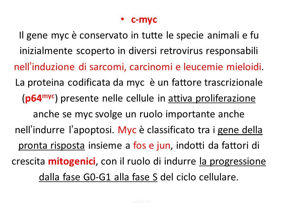 Il gene myc è conservato in tutte le specie animali e fu