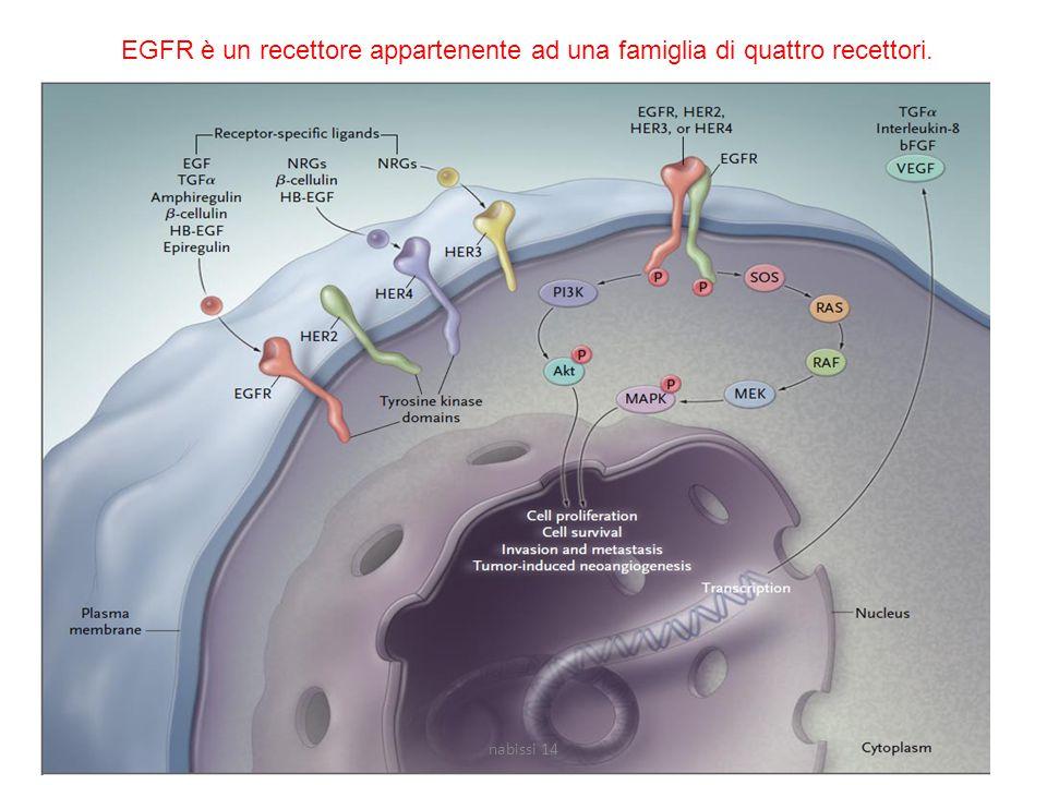 EGFR è un recettore appartenente ad una famiglia di quattro recettori.