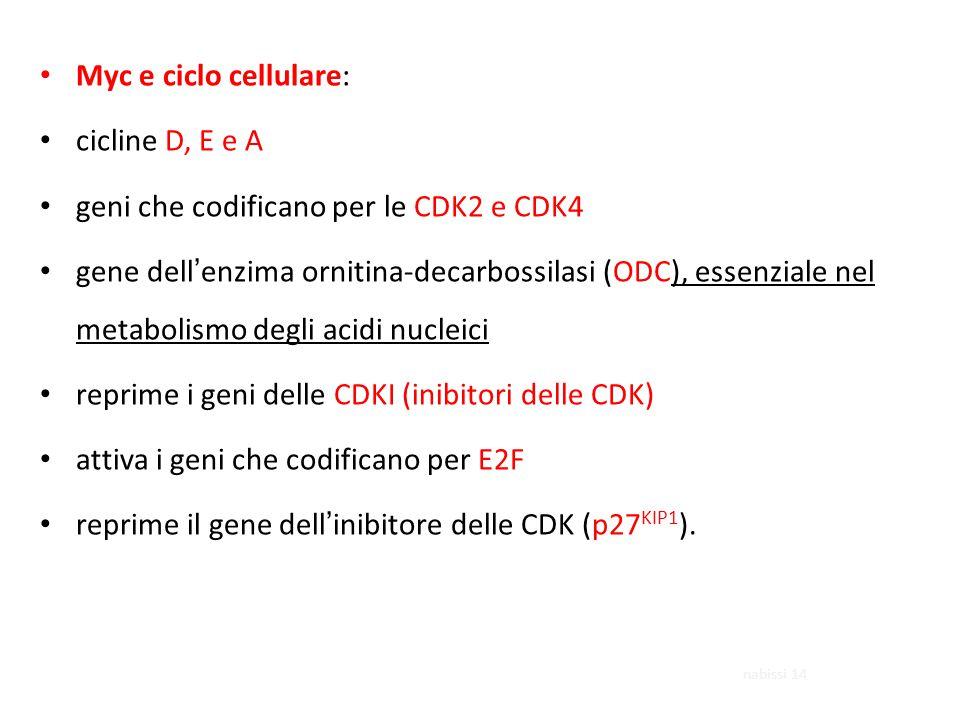 geni che codificano per le CDK2 e CDK4