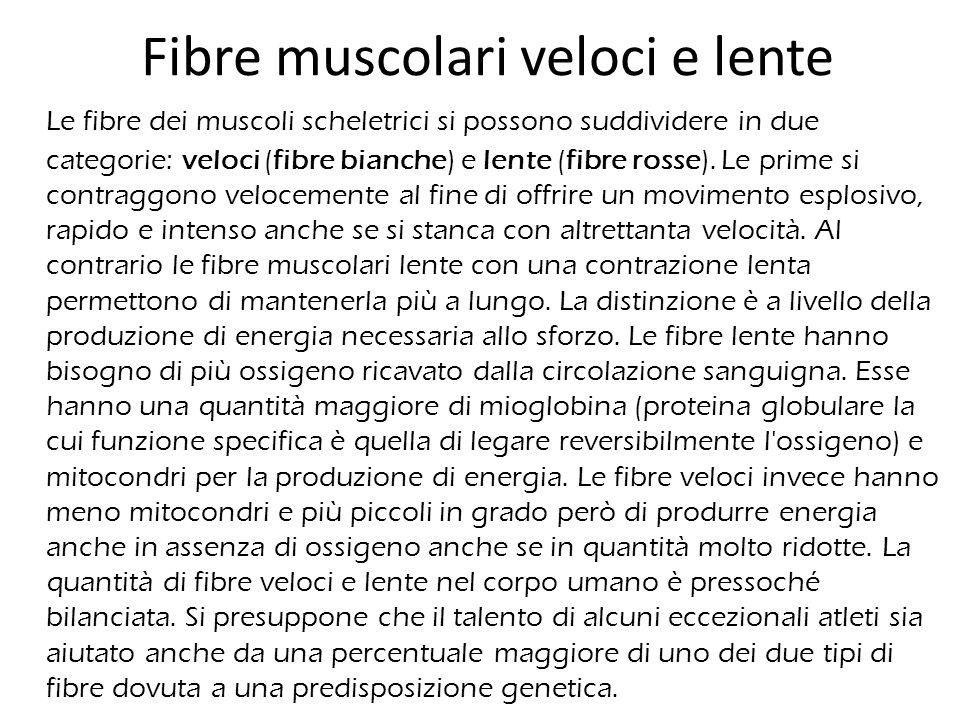 Fibre muscolari veloci e lente