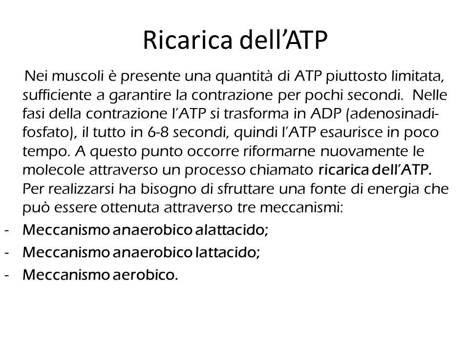 Ricarica dell'ATP