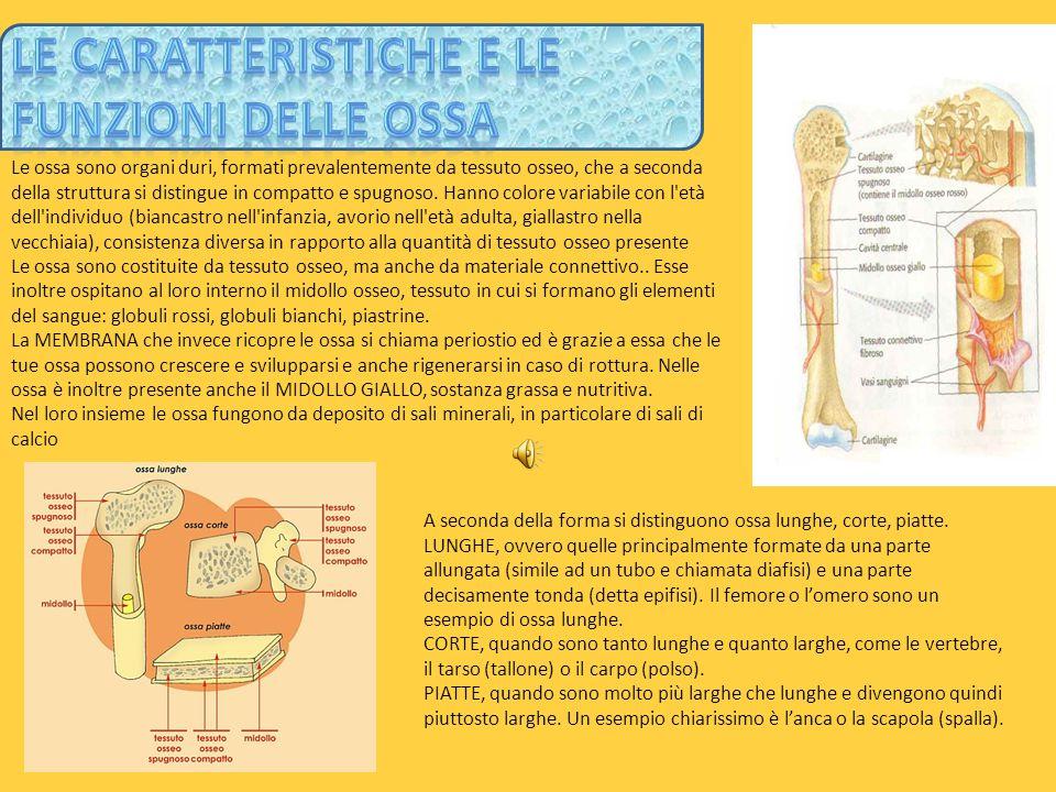 Le Caratteristiche e le funzioni delle ossa