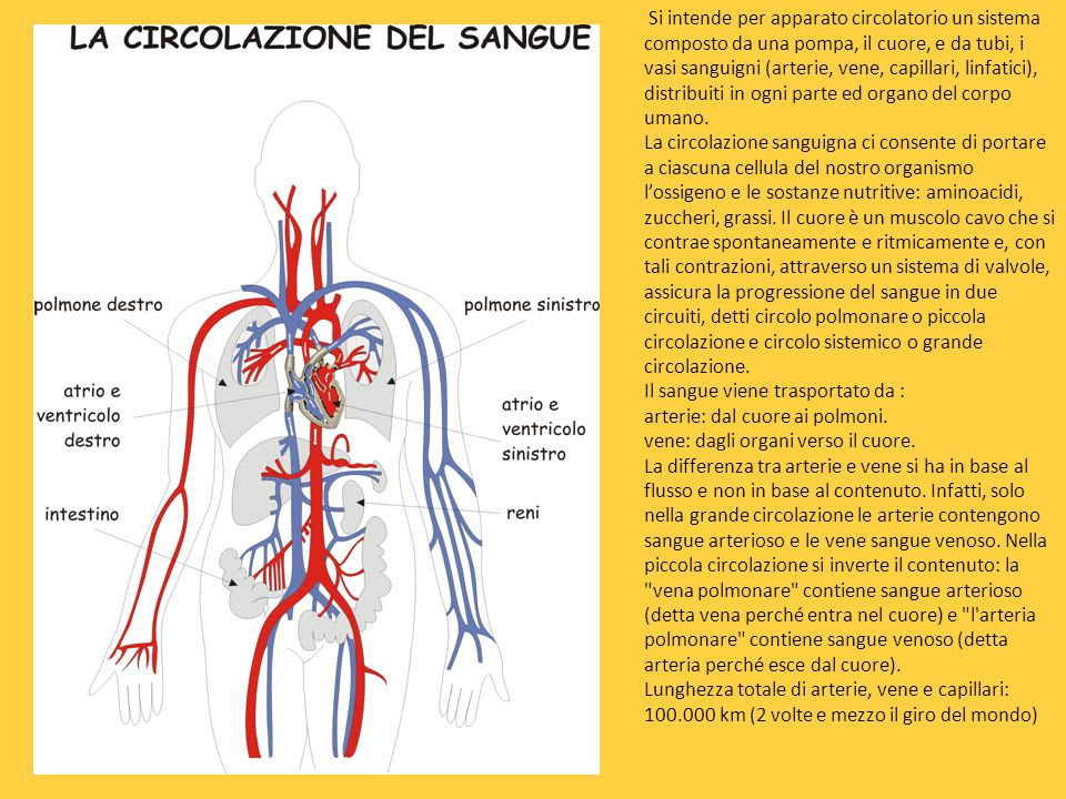 Si intende per apparato circolatorio un sistema composto da una pompa, il cuore, e da tubi, i vasi sanguigni (arterie, vene, capillari, linfatici), distribuiti in ogni parte ed organo del corpo umano.