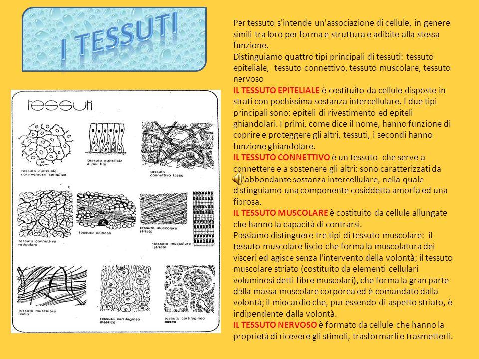 I TESSUTI Per tessuto s intende un associazione di cellule, in genere simili tra loro per forma e struttura e adibite alla stessa funzione.