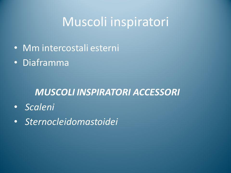 Muscoli inspiratori Mm intercostali esterni Diaframma