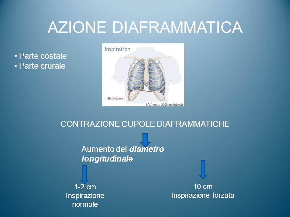 CONTRAZIONE CUPOLE DIAFRAMMATICHE