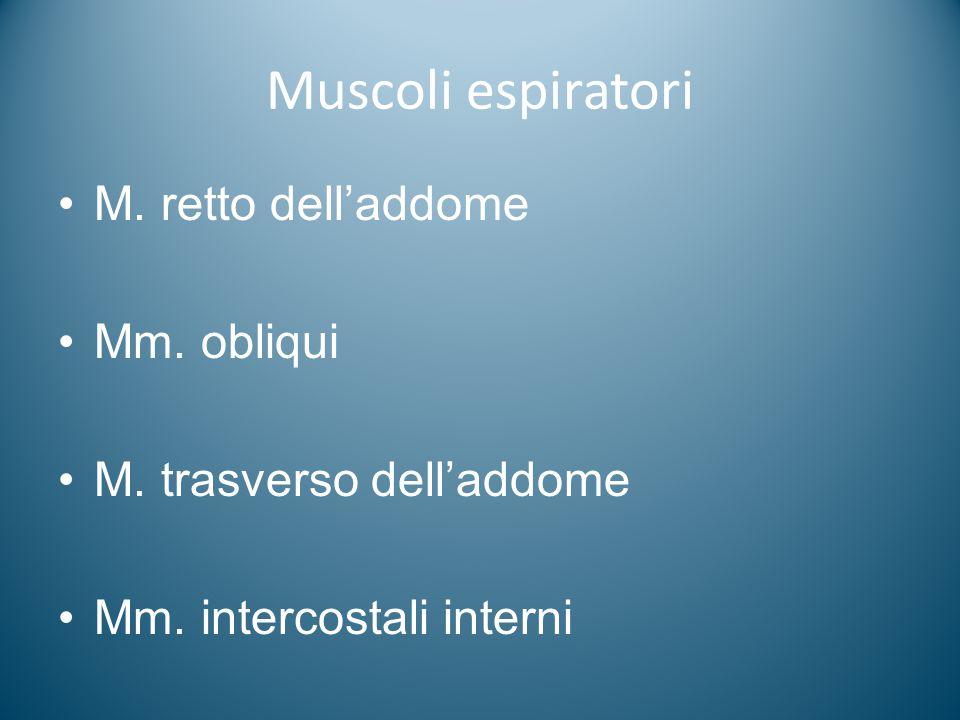 Muscoli espiratori M. retto dell'addome Mm. obliqui
