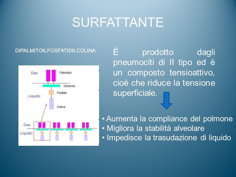 SURFATTANTE DIPALMITOILFOSFATIDILCOLINA.