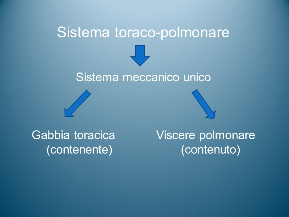Sistema toraco-polmonare
