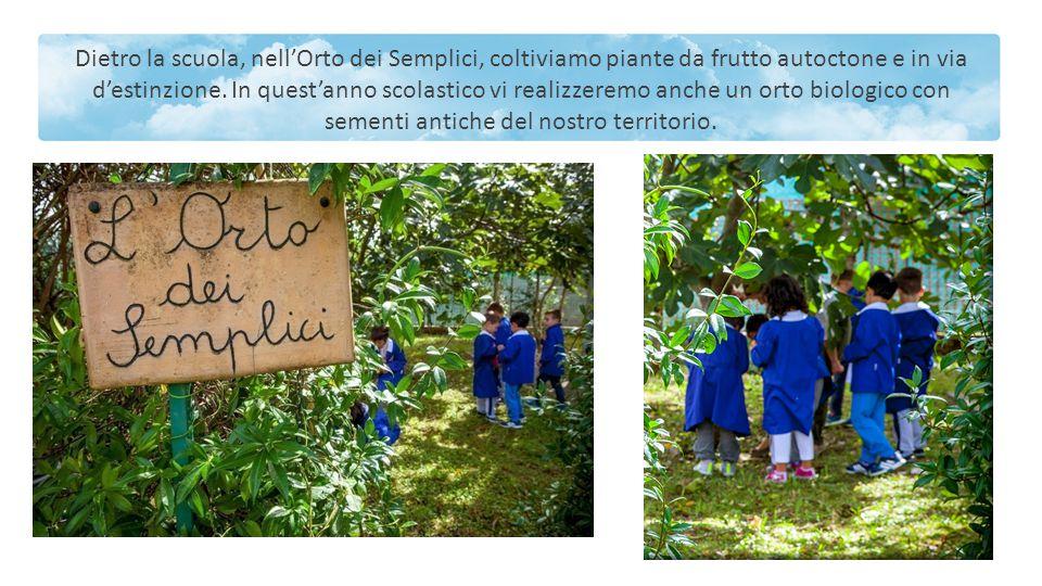 Dietro la scuola, nell'Orto dei Semplici, coltiviamo piante da frutto autoctone e in via d'estinzione.