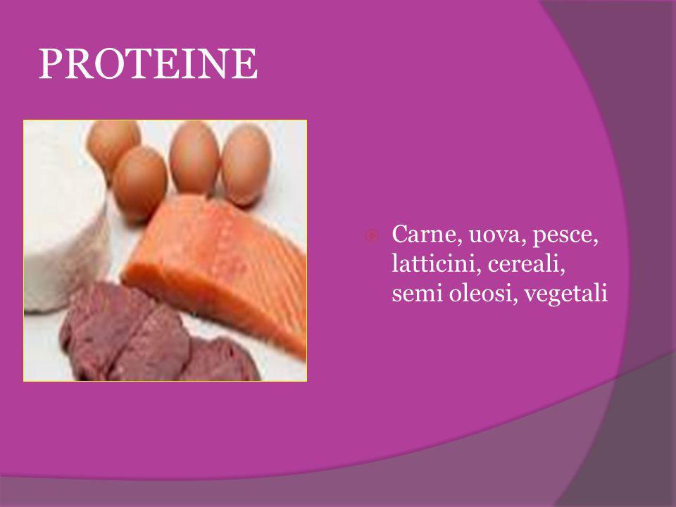 PROTEINE Carne, uova, pesce, latticini, cereali, semi oleosi, vegetali