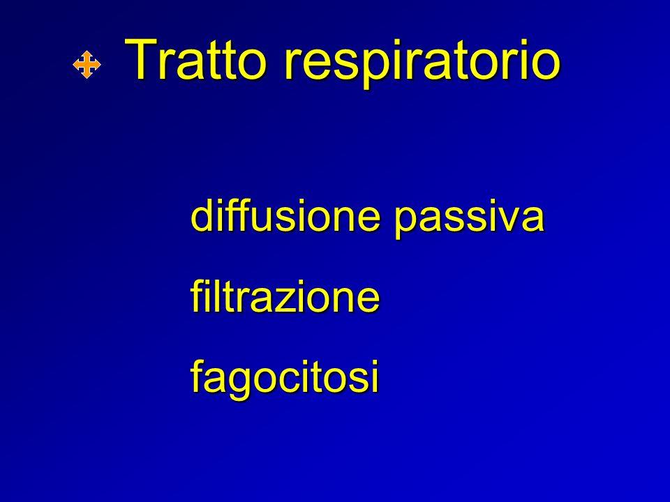 Tratto respiratorio diffusione passiva filtrazione fagocitosi