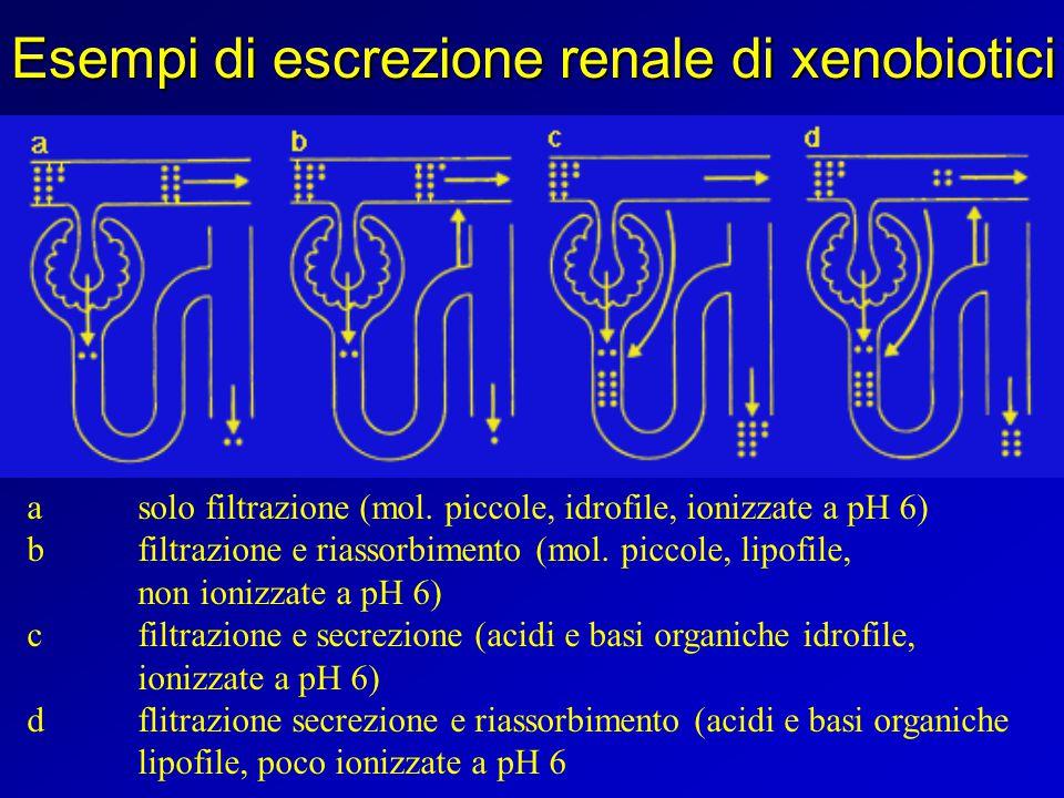 Esempi di escrezione renale di xenobiotici