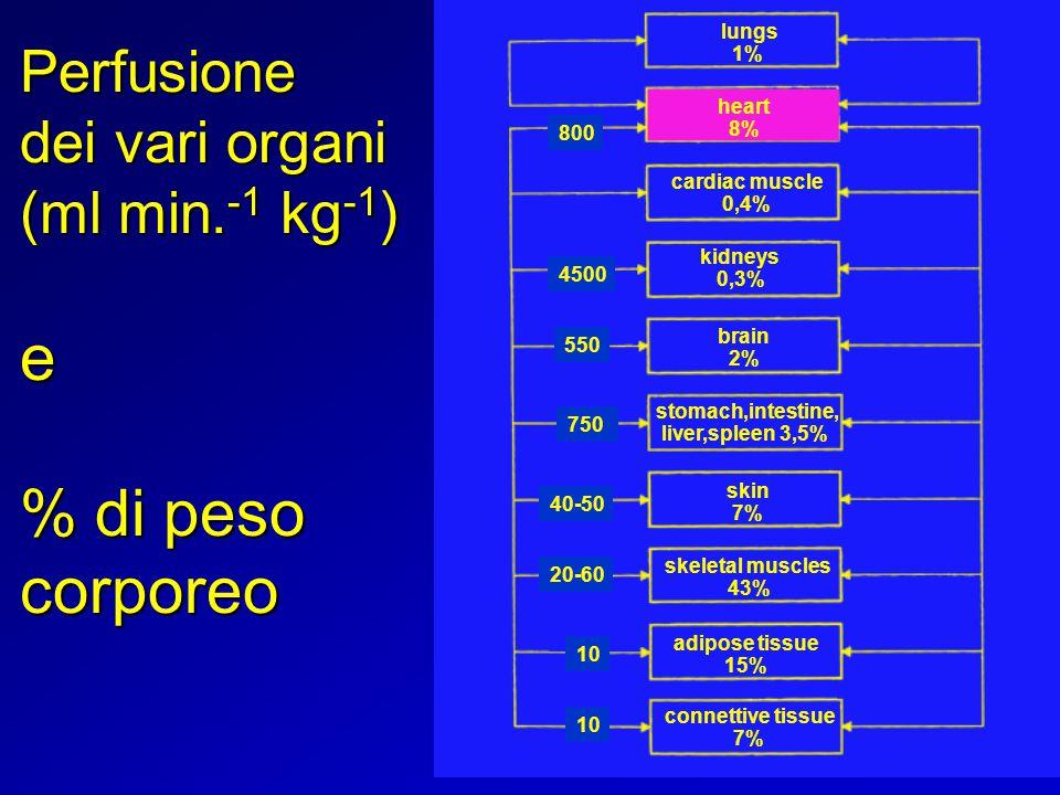e % di peso corporeo Perfusione dei vari organi (ml min.-1 kg-1) lungs