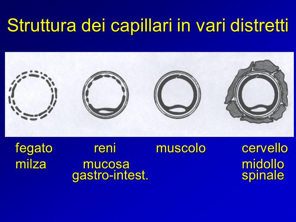 Struttura dei capillari in vari distretti