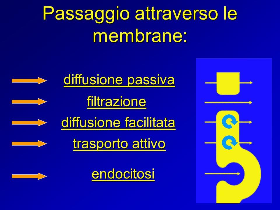 Passaggio attraverso le membrane: