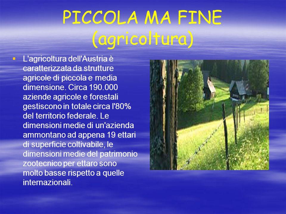 PICCOLA MA FINE (agricoltura)