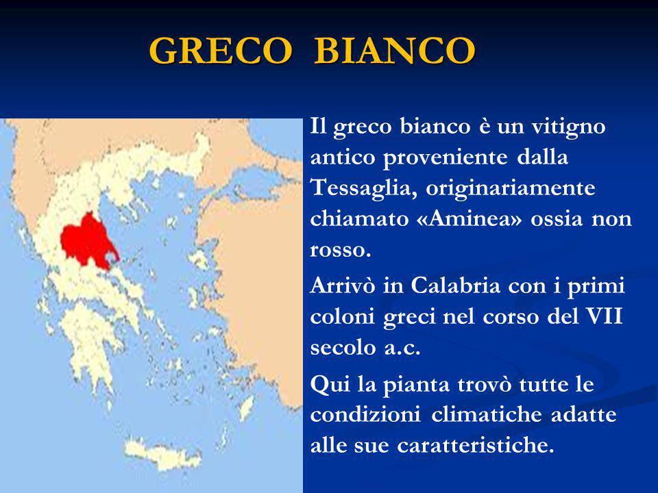 GRECO BIANCO