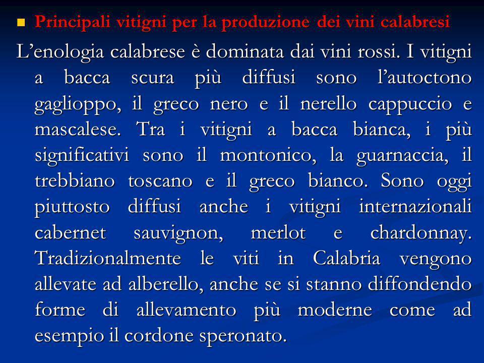 Principali vitigni per la produzione dei vini calabresi