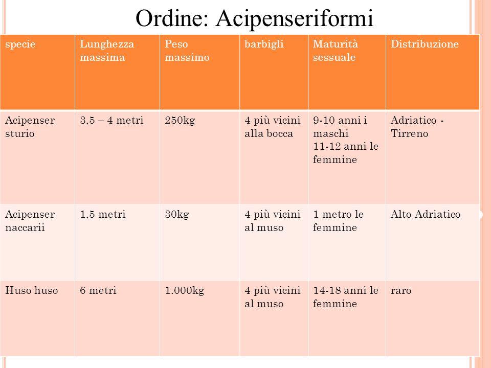 Ordine: Acipenseriformi