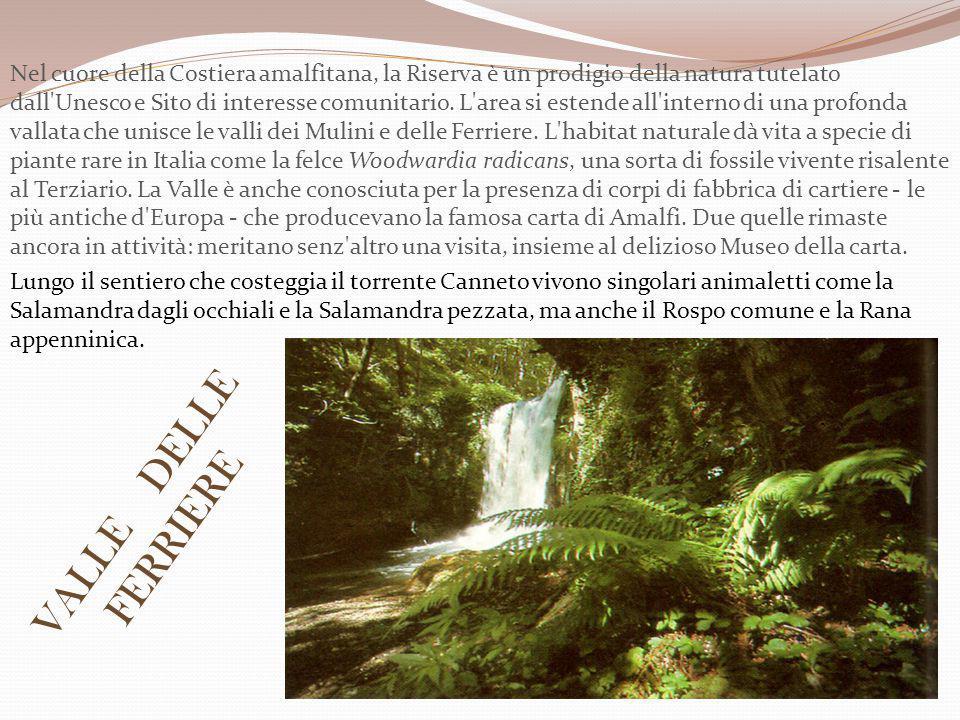 Nel cuore della Costiera amalfitana, la Riserva è un prodigio della natura tutelato dall Unesco e Sito di interesse comunitario. L area si estende all interno di una profonda vallata che unisce le valli dei Mulini e delle Ferriere. L habitat naturale dà vita a specie di piante rare in Italia come la felce Woodwardia radicans, una sorta di fossile vivente risalente al Terziario. La Valle è anche conosciuta per la presenza di corpi di fabbrica di cartiere - le più antiche d Europa - che producevano la famosa carta di Amalfi. Due quelle rimaste ancora in attività: meritano senz altro una visita, insieme al delizioso Museo della carta.