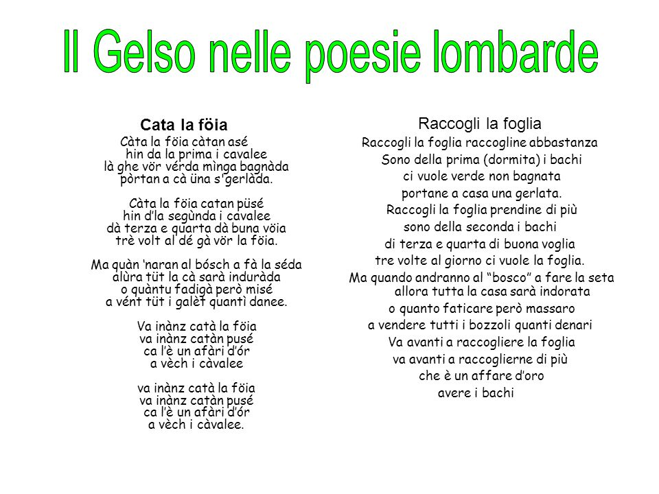 Il Gelso nelle poesie lombarde