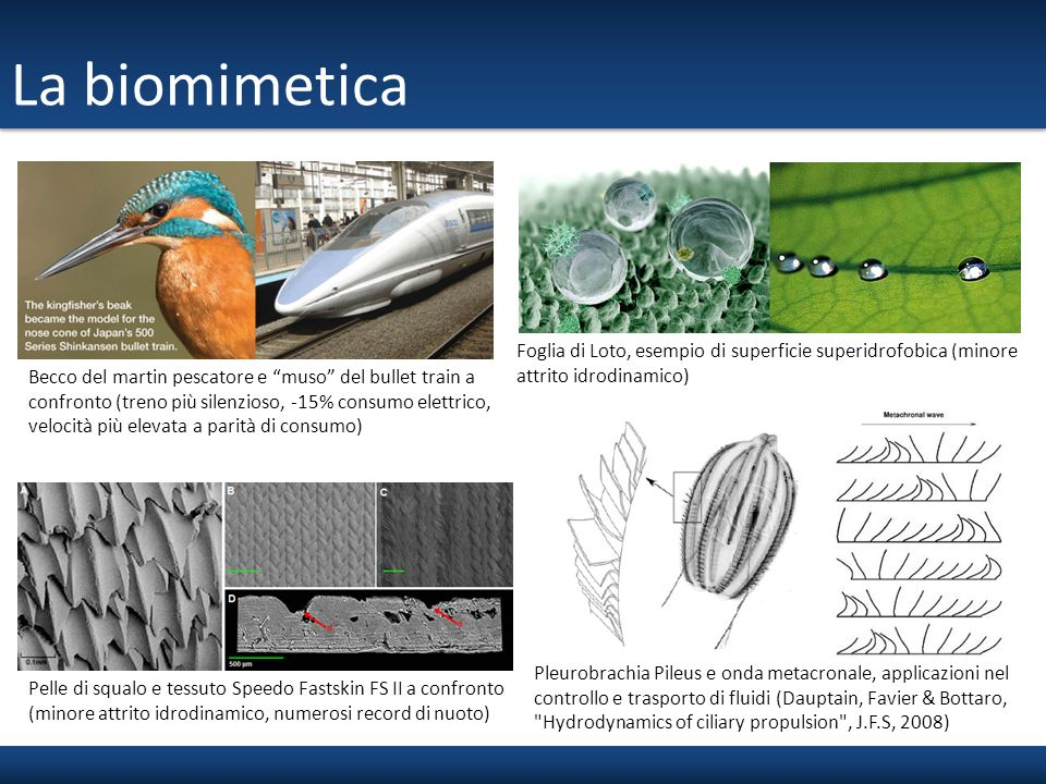 La biomimetica Foglia di Loto, esempio di superficie superidrofobica (minore attrito idrodinamico)