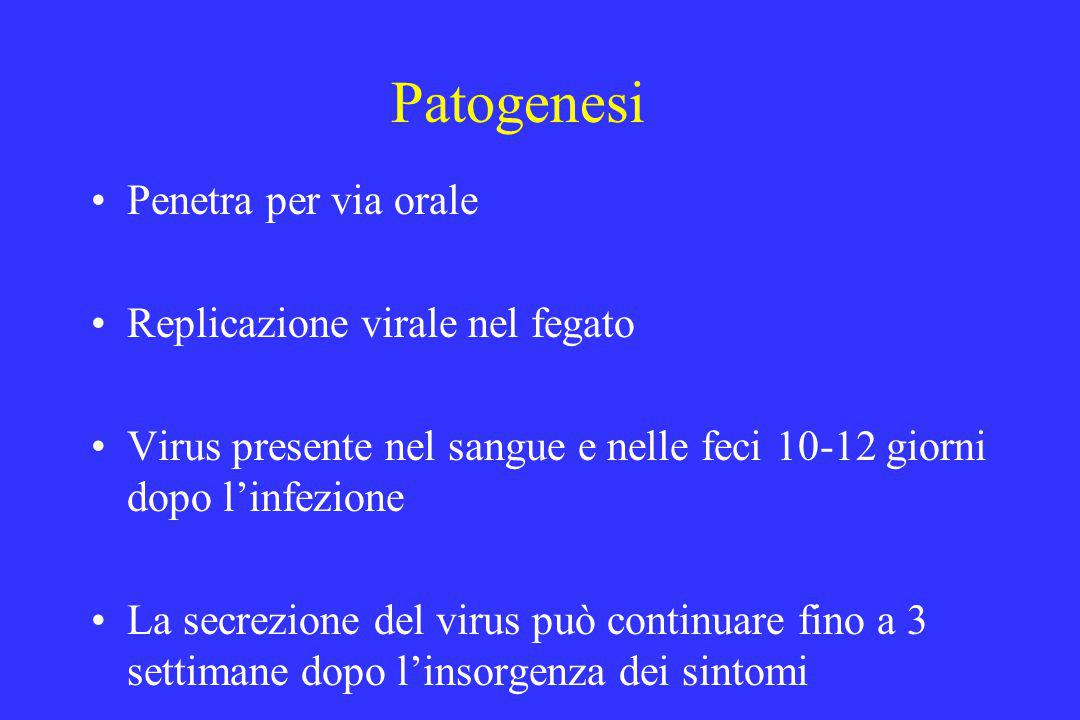 Patogenesi Penetra per via orale Replicazione virale nel fegato