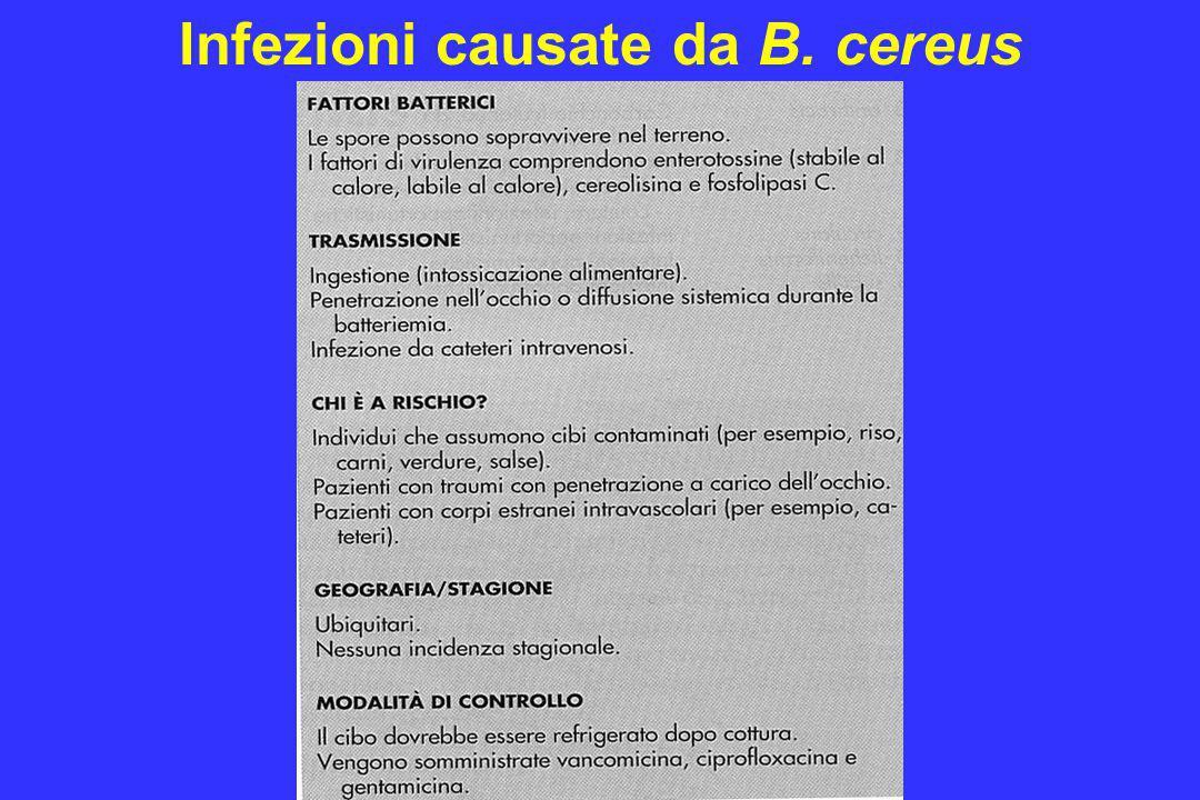 Infezioni causate da B. cereus