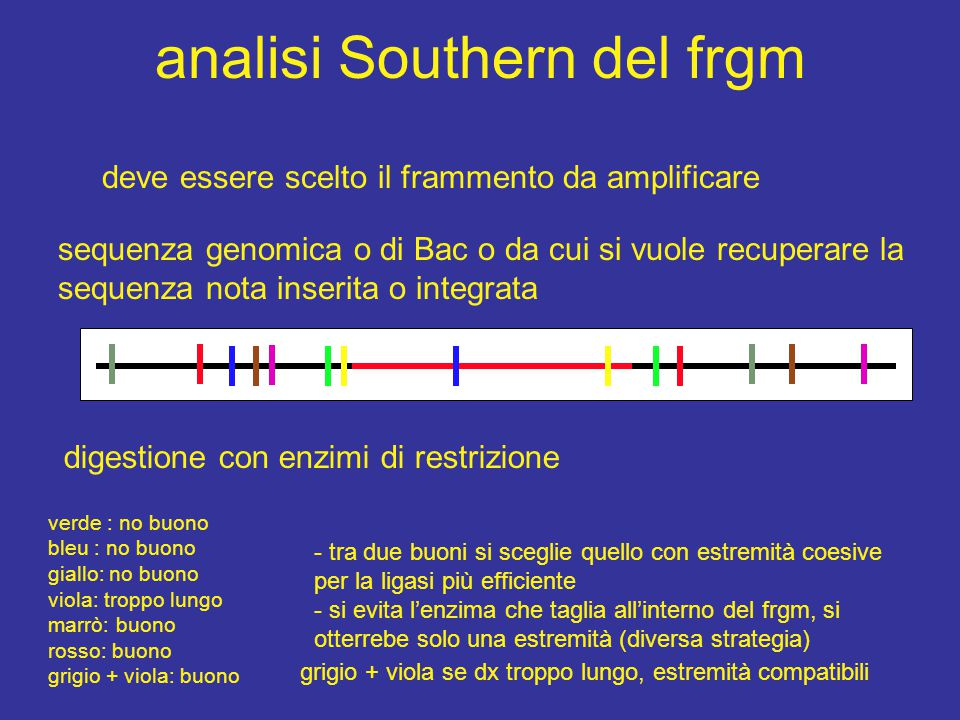 analisi Southern del frgm