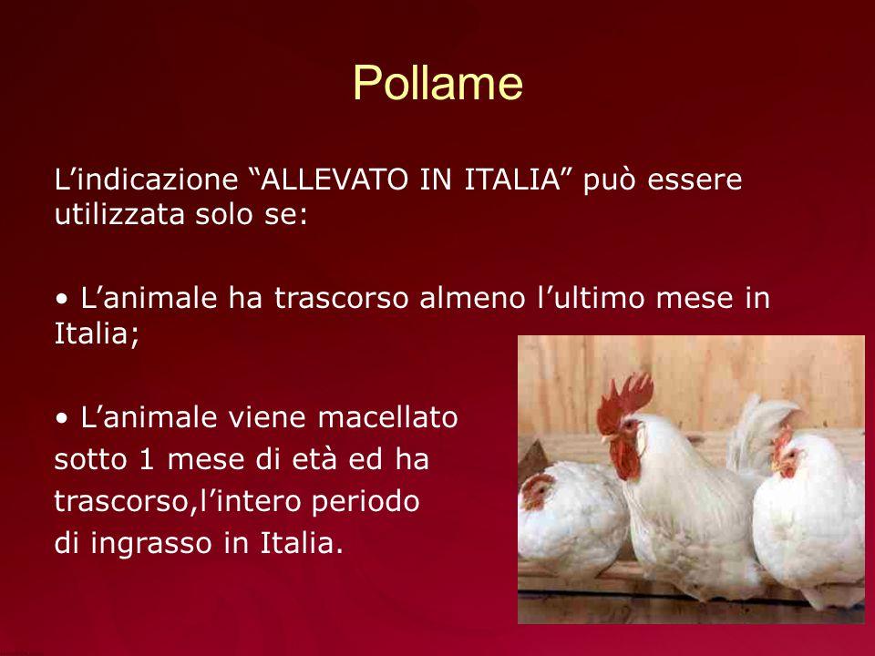 Pollame L'indicazione ALLEVATO IN ITALIA può essere utilizzata solo se: L'animale ha trascorso almeno l'ultimo mese in Italia;