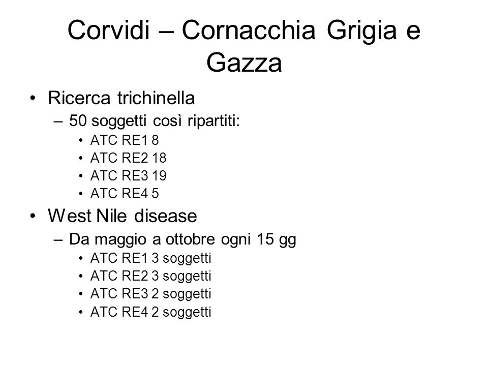 Corvidi – Cornacchia Grigia e Gazza
