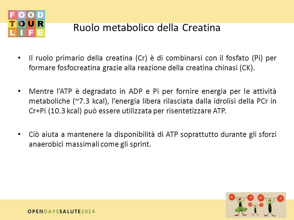 Ruolo metabolico della Creatina
