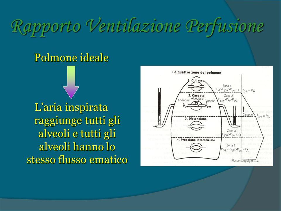 Rapporto Ventilazione Perfusione