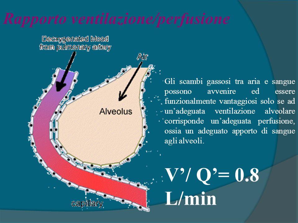 V'/ Q'= 0.8 L/min Rapporto ventilazione/perfusione