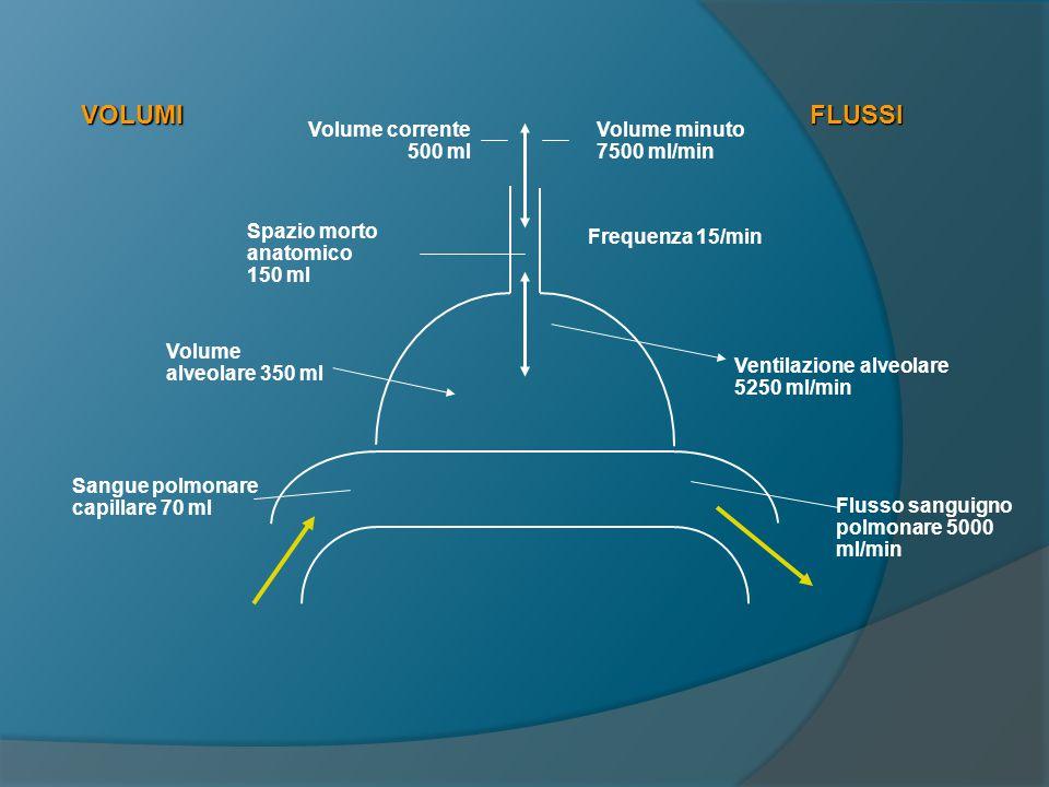 VOLUMI FLUSSI Volume corrente 500 ml Volume minuto 7500 ml/min